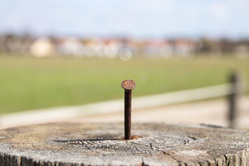 Ржавый ноготь Крупный план старого выдерживая пня дерева с фокусом на ржавом ногте утюга стоковые фото