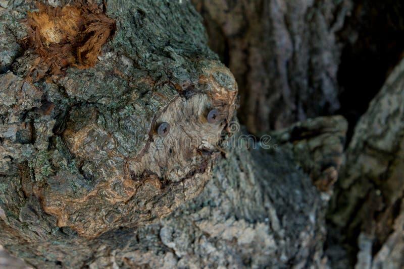 Ржавый ноготь на стволе дерева для предпосылки концепции стоковое фото