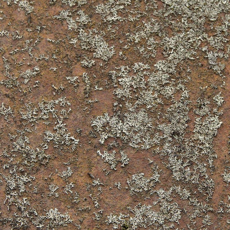 Ржав-меховой утюг стоковая фотография rf