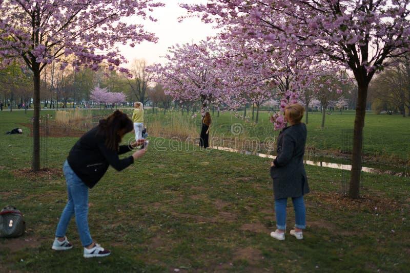 РИГА, ЛАТВИЯ - 24-ОЕ АПРЕЛЯ 2019: Люди в парке победы наслаждаясь вишневым цветом Сакуры - каналом города с летанием чайок стоковые фотографии rf