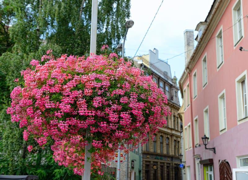 Download Рига, Латвия стоковое фото. изображение насчитывающей город - 33735304