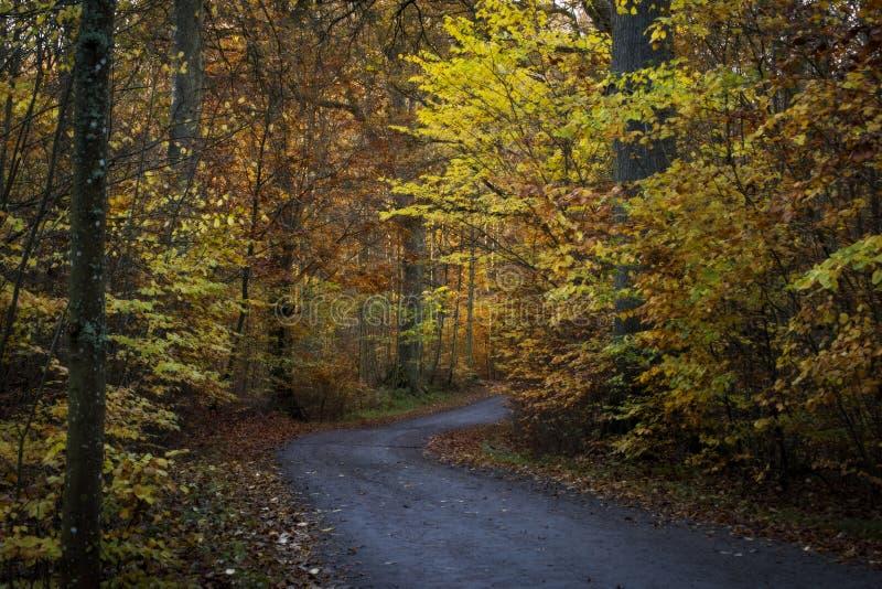 Ринв дороги древесины в осени стоковое фото