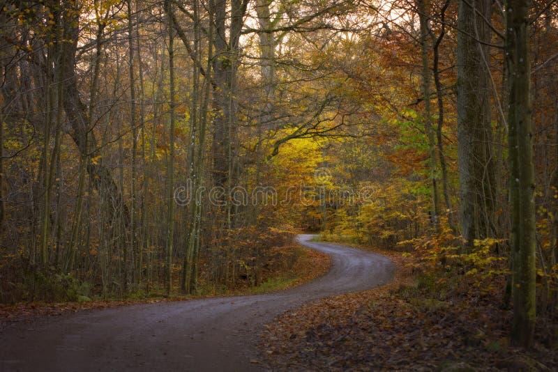 Ринв дороги обои леса осени стоковая фотография rf