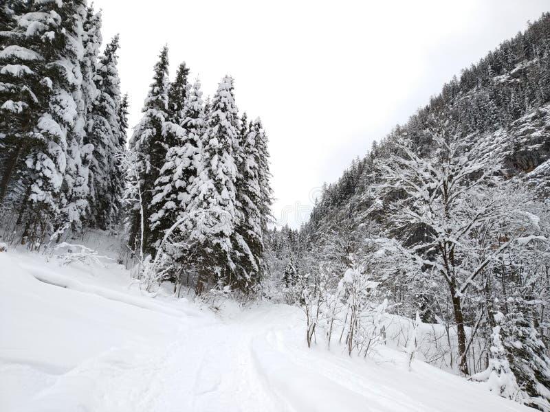 Ринв прогулки снежное Hallstatt, Австрия Взгляд зимы от верхней части стоковые изображения rf