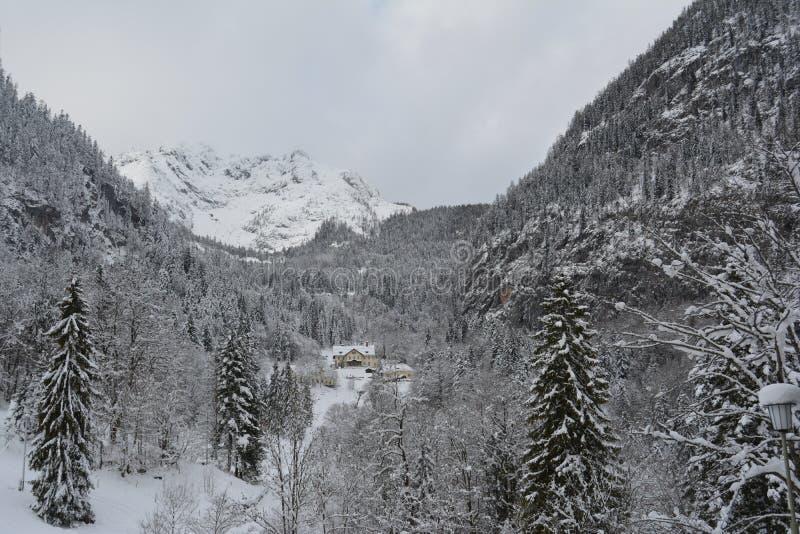 Ринв прогулки снежные горы Hallstatt, Австрии разветвляет зима взгляда вала снежка ели стоковое фото rf