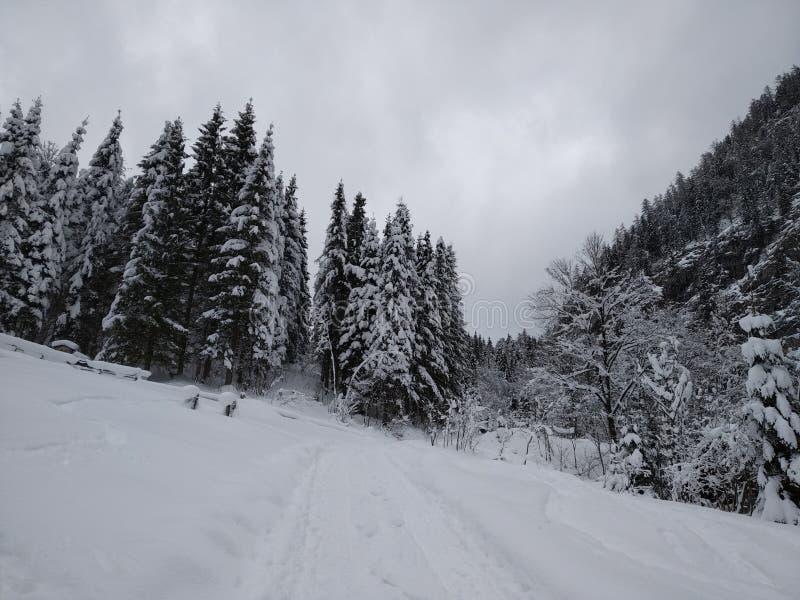 Ринв прогулки снежные леса Hallstatt, Австрии Взгляд зимы от верхней части стоковые изображения rf