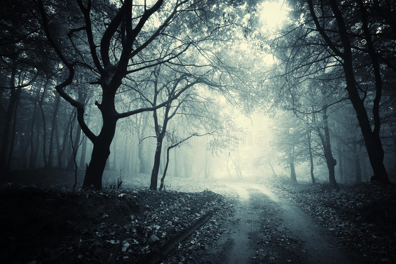Ринв пути темный загадочный лес с туманом стоковые изображения rf
