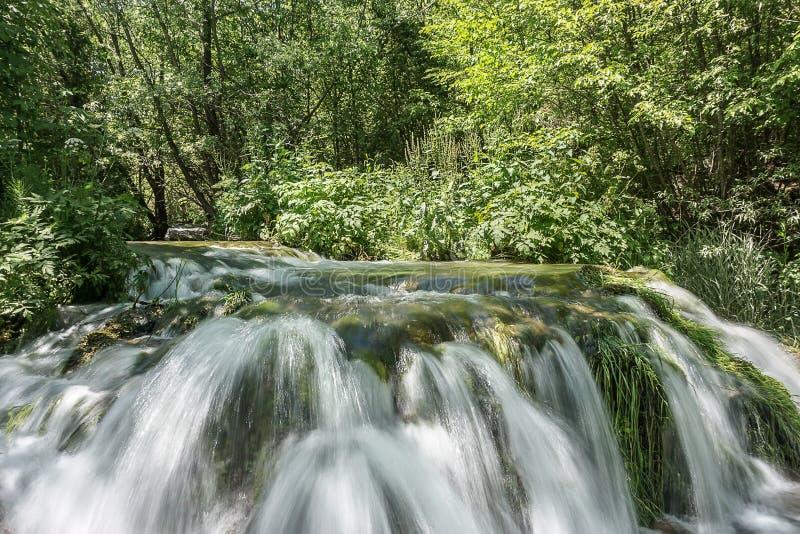 Ринв реки идущий forrest на солнечный день стоковое изображение