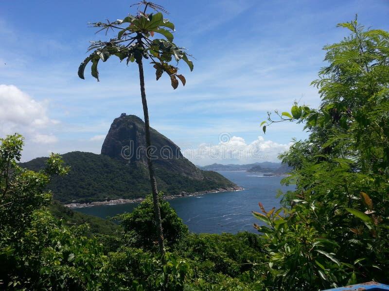 Рио-де-Жанейро Pao de Acucar стоковые фотографии rf