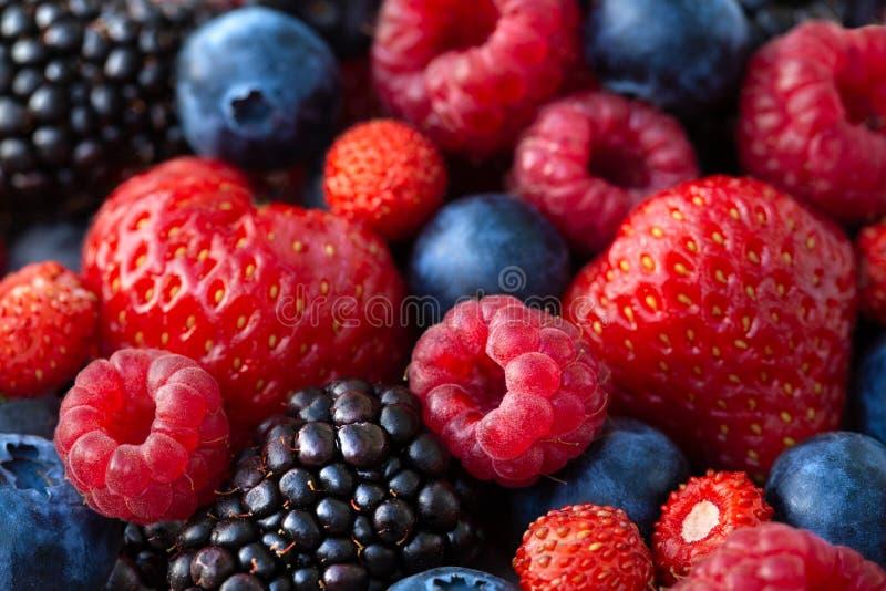 Рип-ягоды стоковая фотография rf