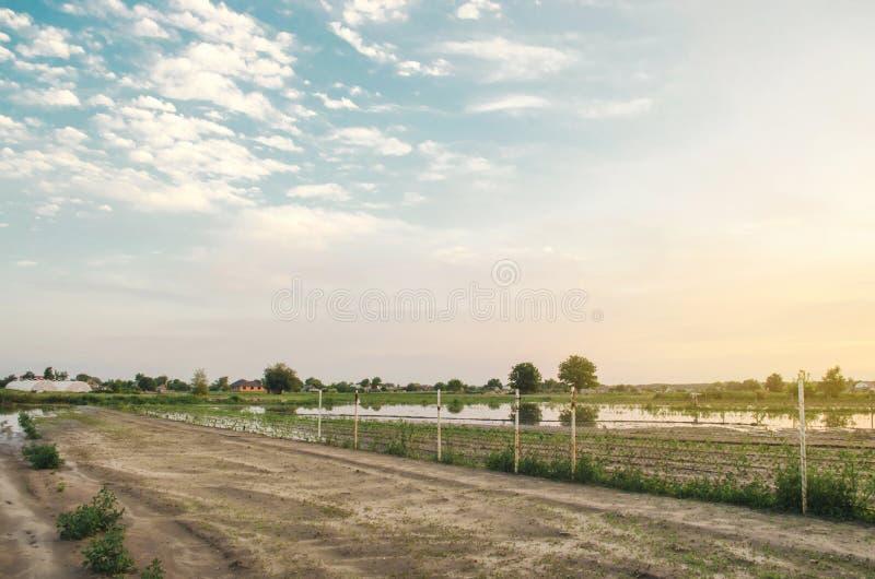 Риски потери стихийного бедствия и урожая Затопленное поле в результате проливного дождя Поток на ферме Земледелие и обрабатывать стоковые фото