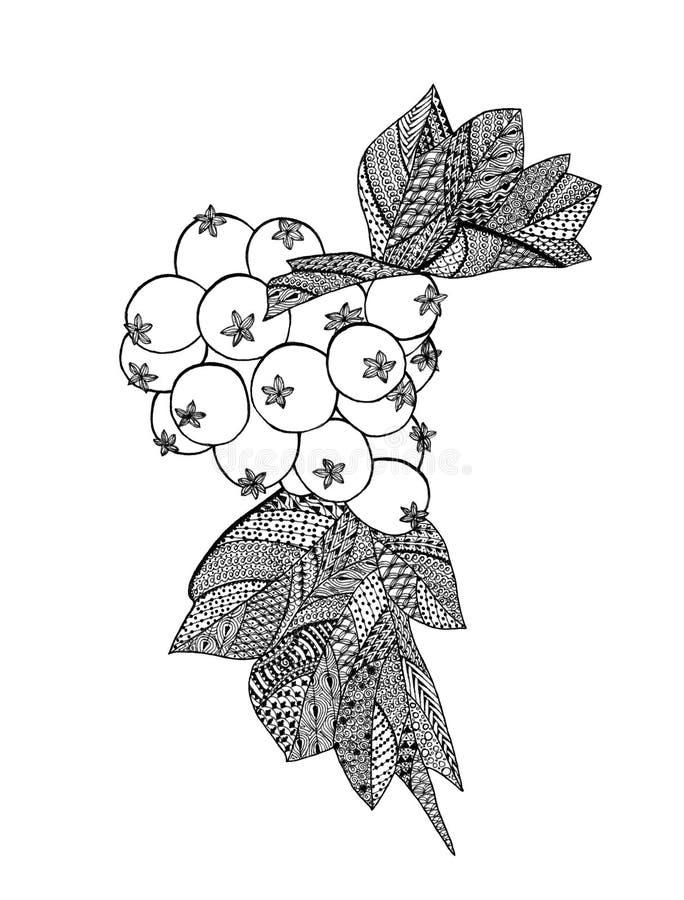 Рисовать ягод боярышника бесплатная иллюстрация