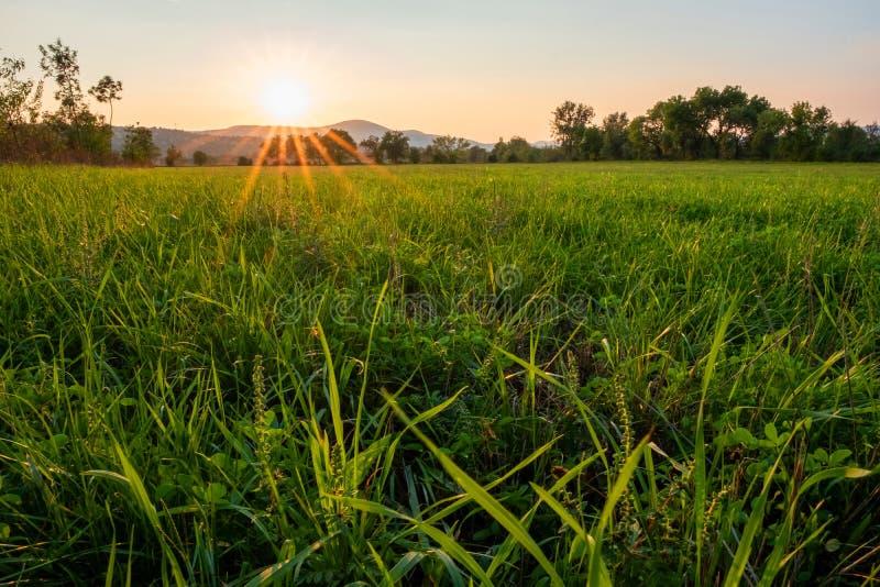Рисовые поля обрабатывая землю на восходе солнца стоковые изображения