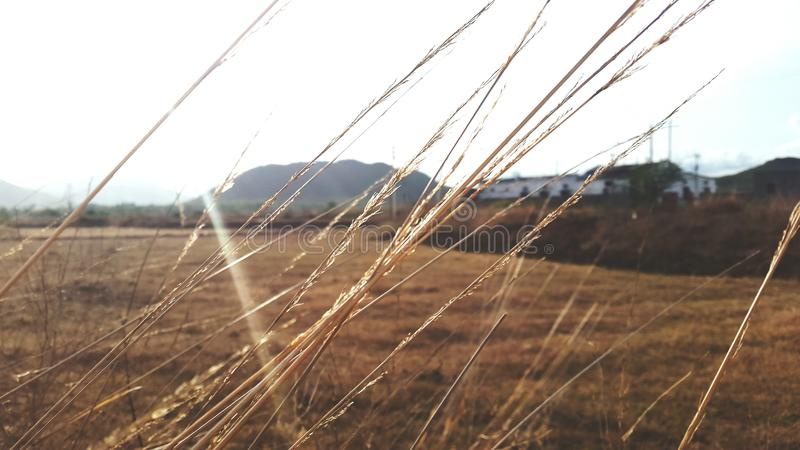 Рисовые посадки стоковые изображения rf