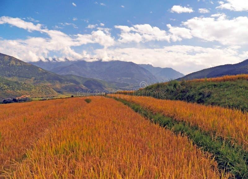 Рисовые поля в Бутане стоковая фотография rf