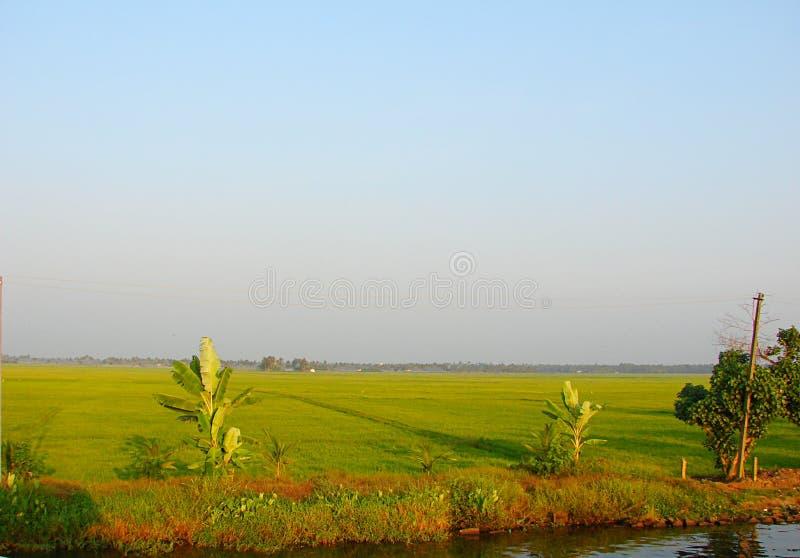 Рисовые поля вдоль канала подпора, Кералы, Индии - естественной предпосылки стоковые изображения