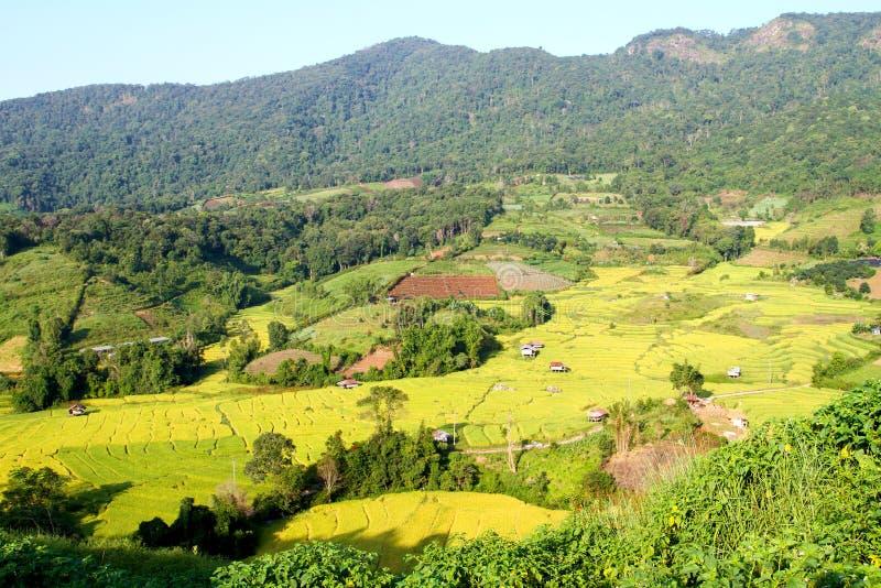 Рисовые терраки на плато стоковая фотография rf