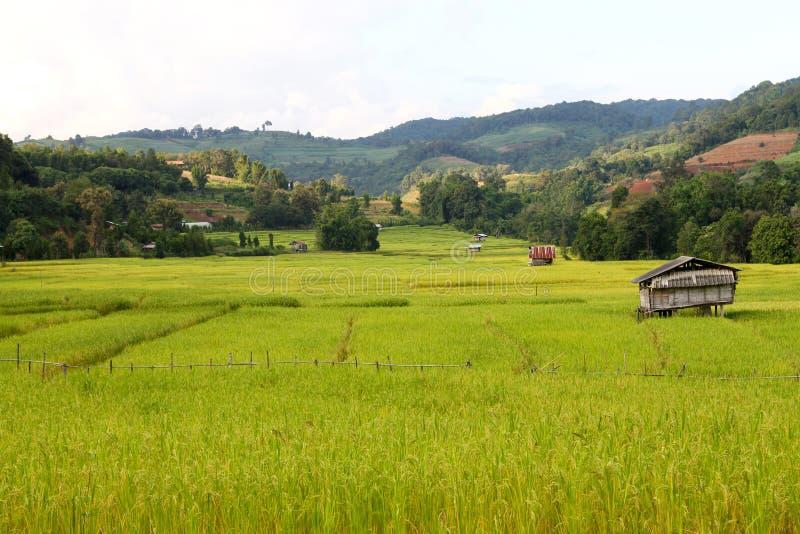 Рисовые терраки на плато стоковые изображения rf