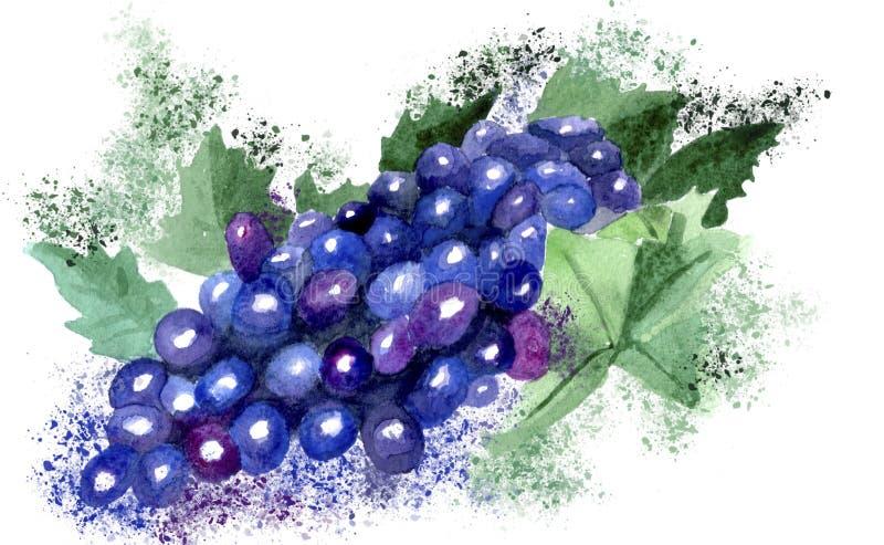 Рисуя акварель виноградины с брызгает иллюстрация вектора