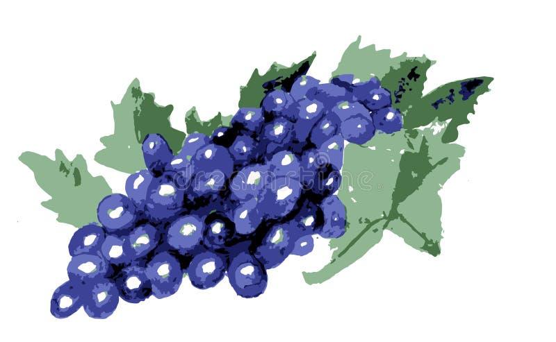 Рисуя голубые виноградины с листьями, вином бесплатная иллюстрация
