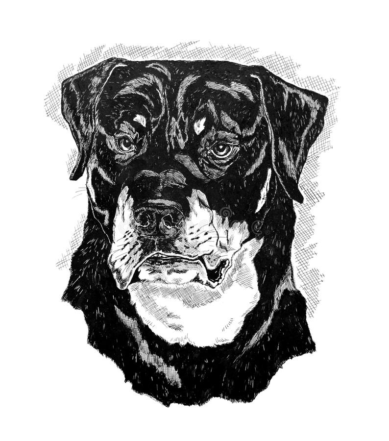 рисуя индийские чернила сделали rottweiler стоковые изображения