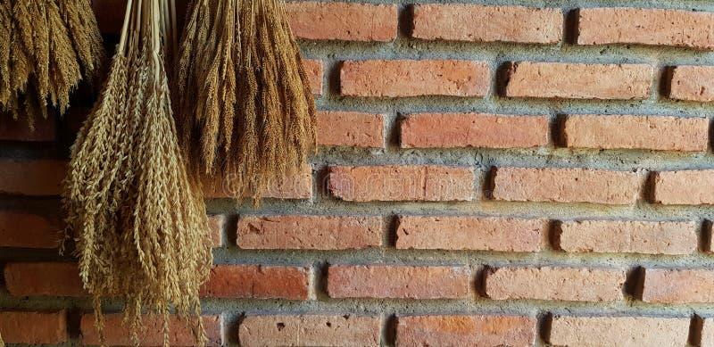 Рис, дерево или цветок высушили висеть и украшают на оранжевой или коричневой кирпичной стене стоковое фото rf
