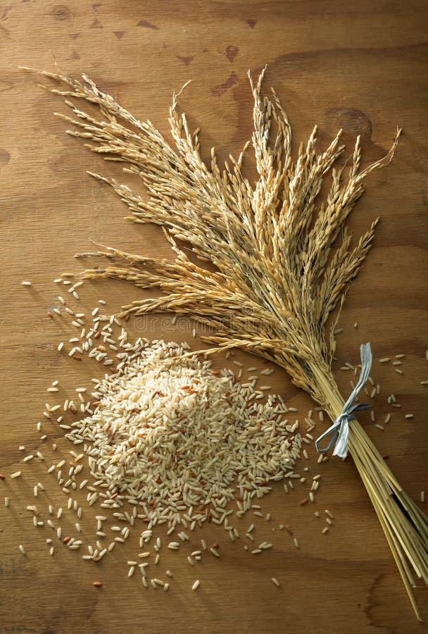 рис зерна стоковые фото