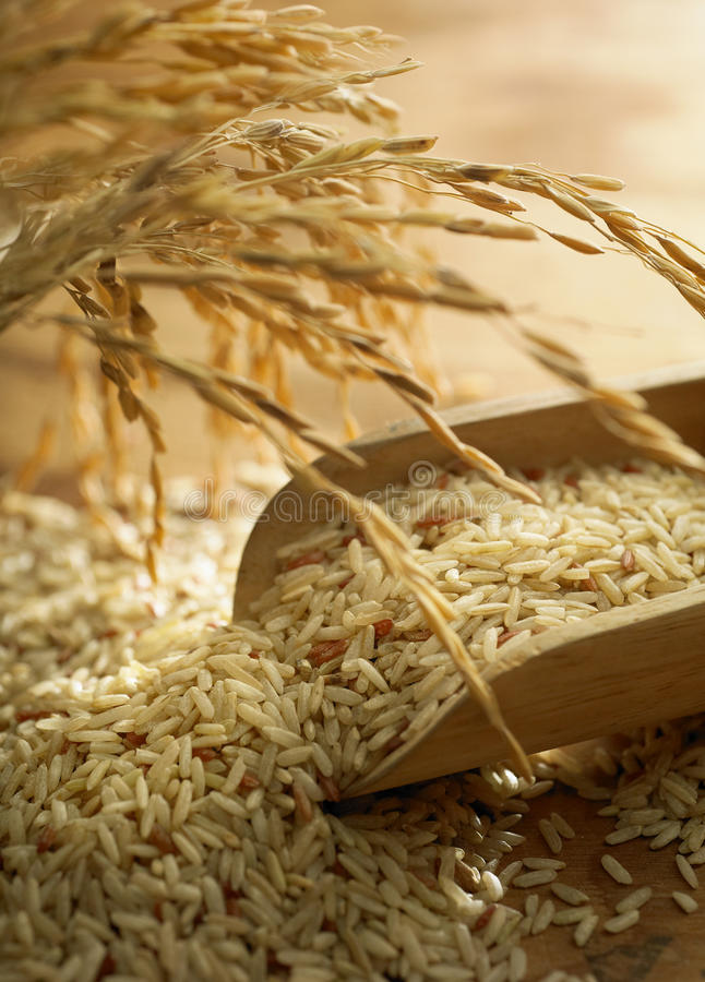рис зерна