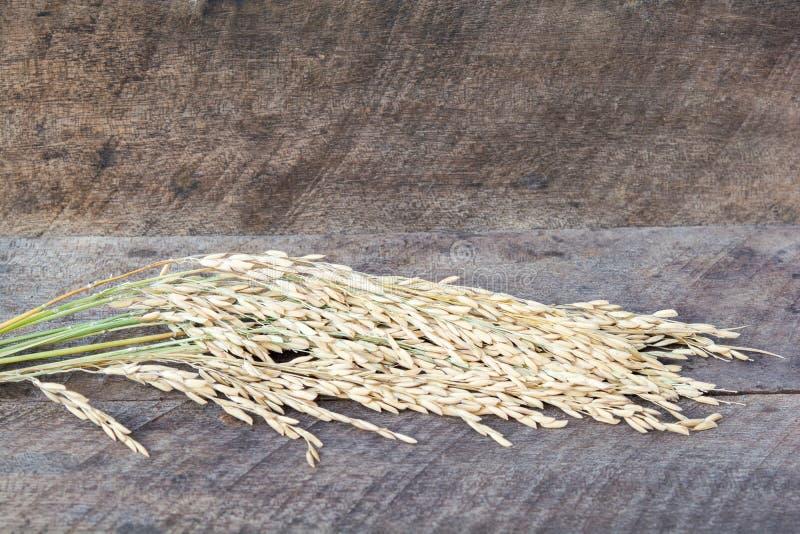 Рис, пади, высушенный рис стоковая фотография