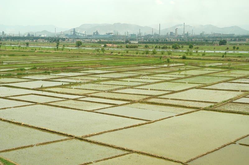 рис поля фабрик стоковые фотографии rf