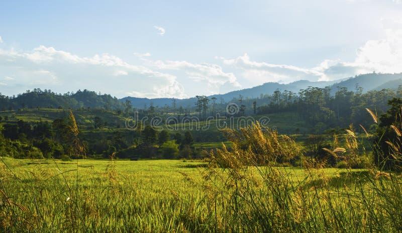рис поля terraced стоковые фото