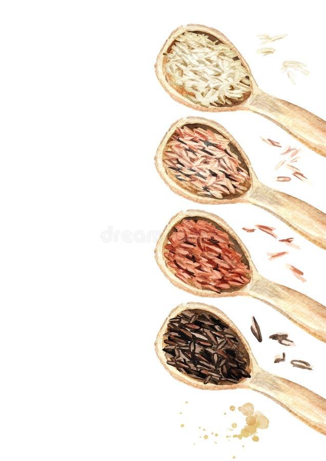 Рис различных разнообразий в деревянном взгляд сверху ложек Иллюстрация акварели нарисованная рукой, изолированная на белой предп иллюстрация штока