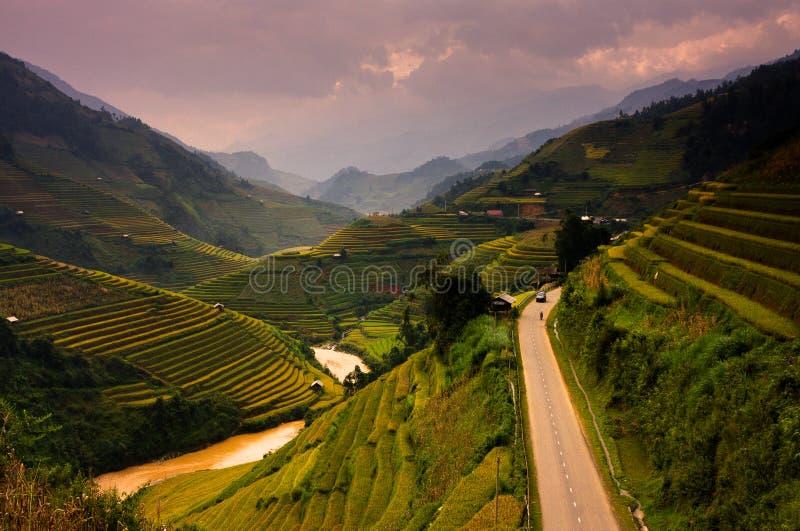 Рис террас fields на горе в северозападе Вьетнама стоковое фото rf