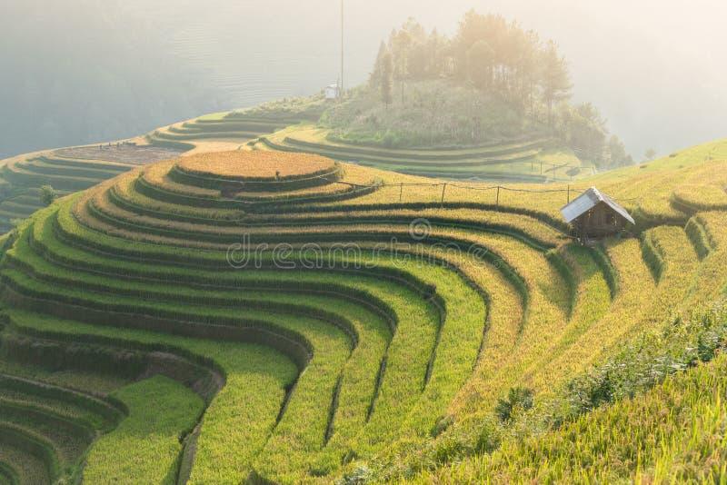 Рис fields на террасном Mu Cang Chai, YenBai, Вьетнама Рис f стоковое фото rf