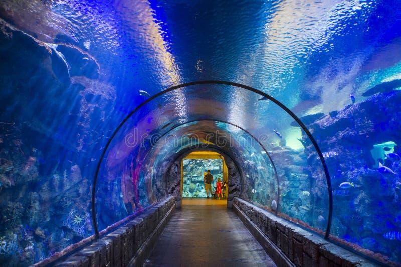 Риф акулы стоковое изображение