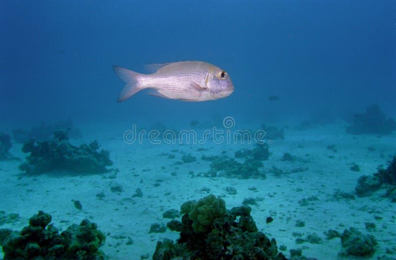 риф жизни коралла подводный стоковое фото