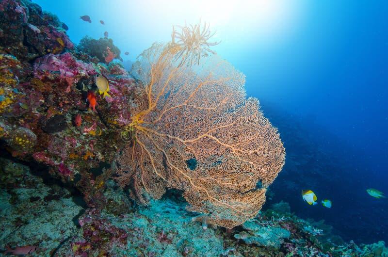 Риф океана подводный с светом солнца через поверхность воды g стоковое изображение rf
