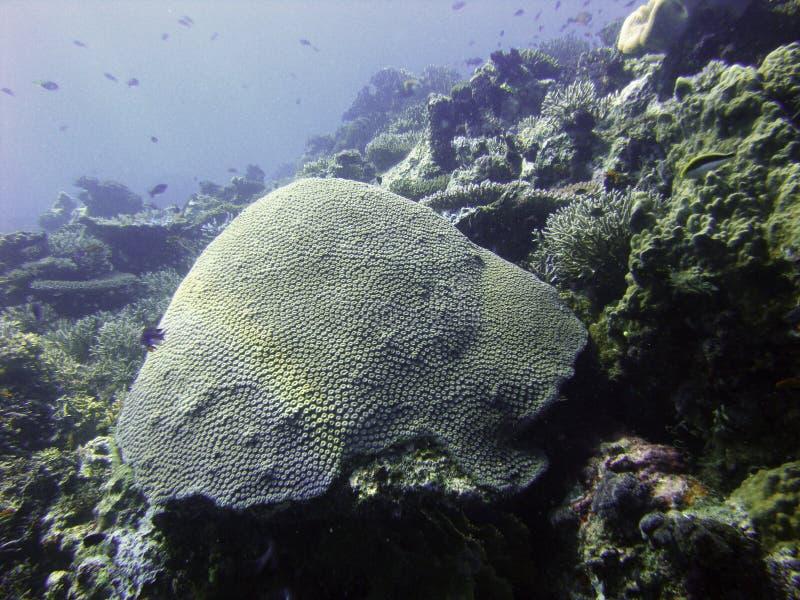 риф перерастанный грибом стоковые фото