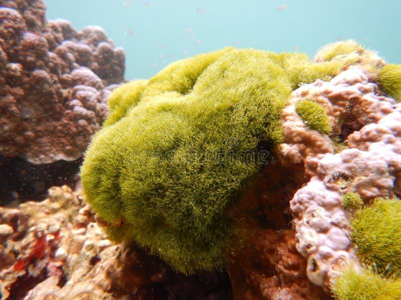 Риф-подводный остров рача-яй, Таиланд стоковая фотография rf
