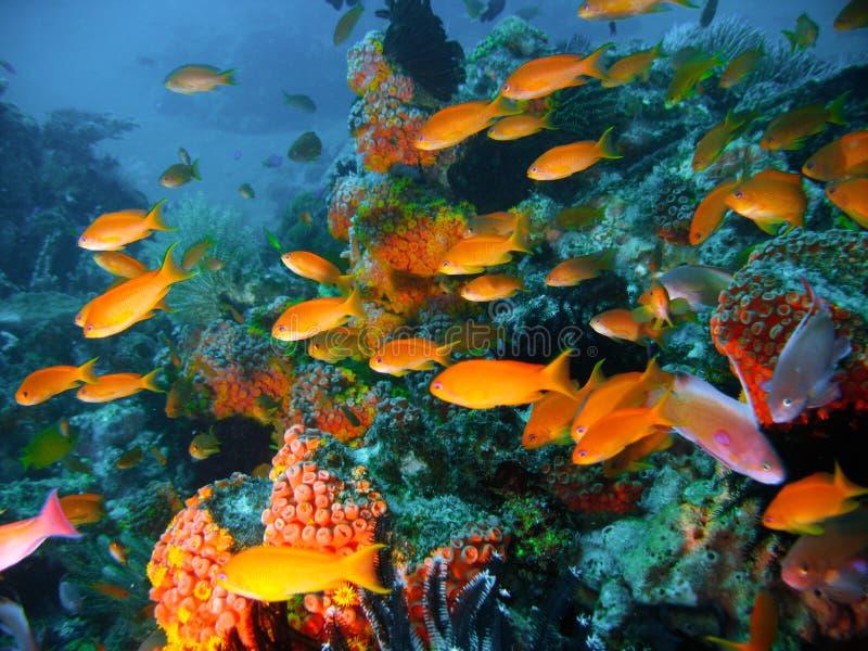 риф рыб коралла тропический стоковая фотография rf