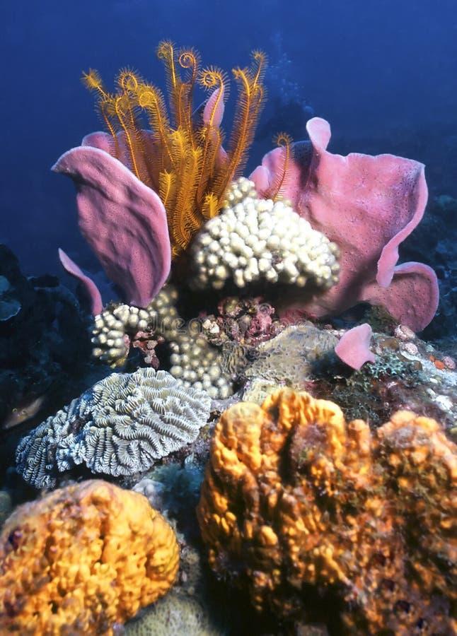 риф dominica стоковое фото