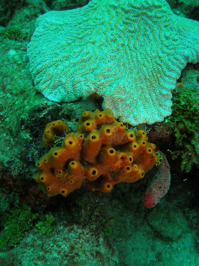 риф florida коралла южный стоковая фотография rf