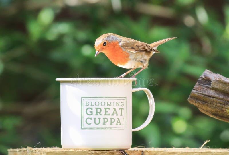 Робин сидело на чашке стоковая фотография