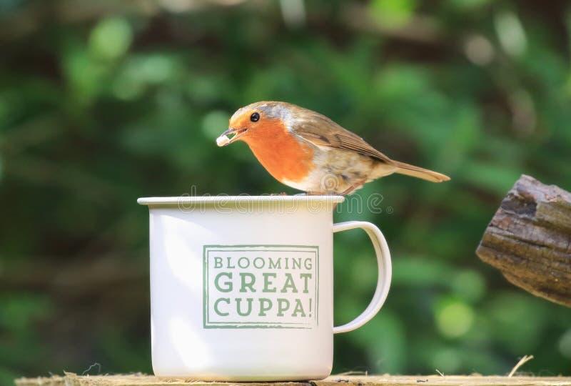 Робин сидело на чашке стоковое изображение rf