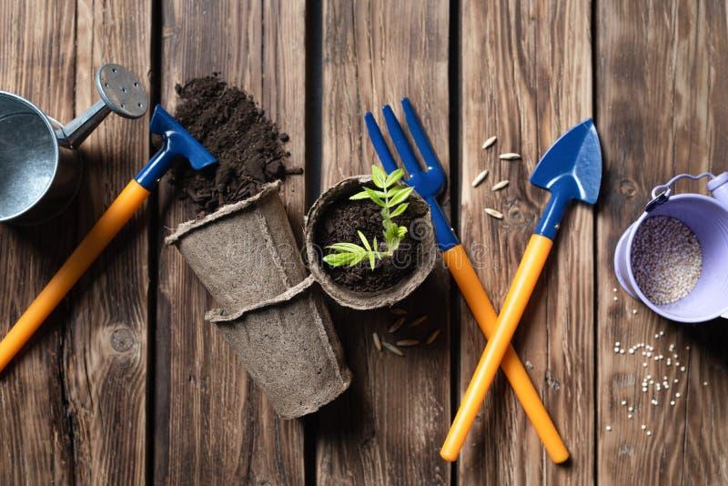 Рованская ветвь как концепция саженцев деревьев Деревянно-коричневый фон с местом для текста средства садоводства стоковая фотография