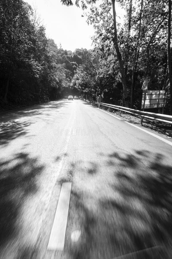 Ровная дорога в тайских джунглях стоковые фотографии rf