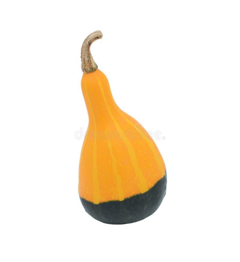 Ровный грушевидный апельсин и зеленая орнаментальная тыква стоковое изображение