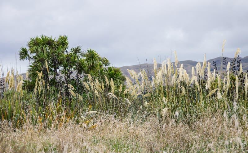 Родная вегетация Новой Зеландии стоковая фотография