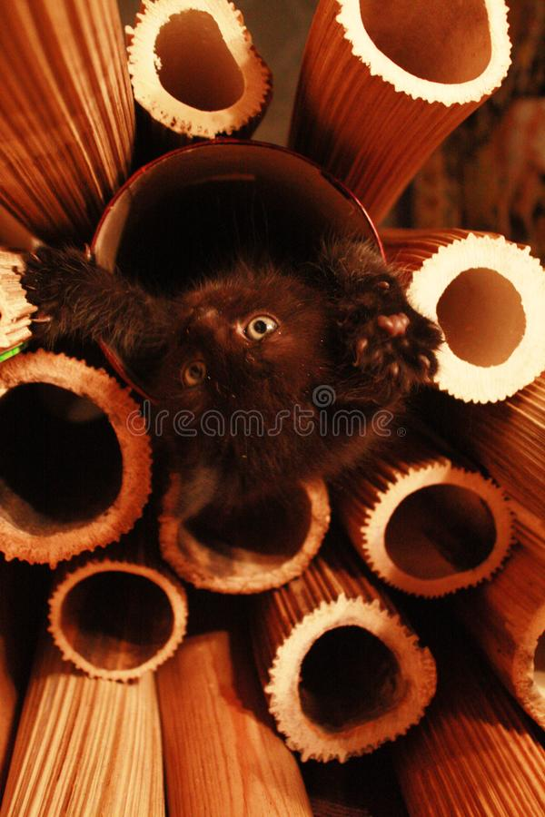 Рождение котенка стоковое фото rf