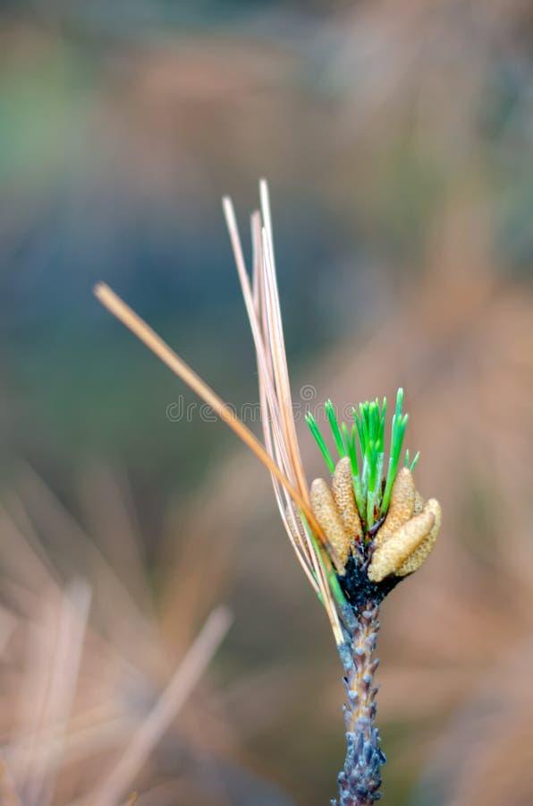 Рождение новой жизни в сухом дереве стоковые фотографии rf